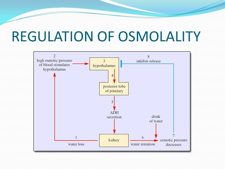 REGULATION OF OSMOLALITY