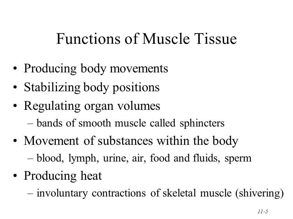 11-5 Functions of Muscle Tissue Producing body movements Stabilizing body positions Regulating organ volumes –bands of smooth muscle called sphincters Movement of substances within the body –blood, lymph, urine, air, food and fluids, sperm Producing heat –involuntary contractions of skeletal muscle (shivering)
