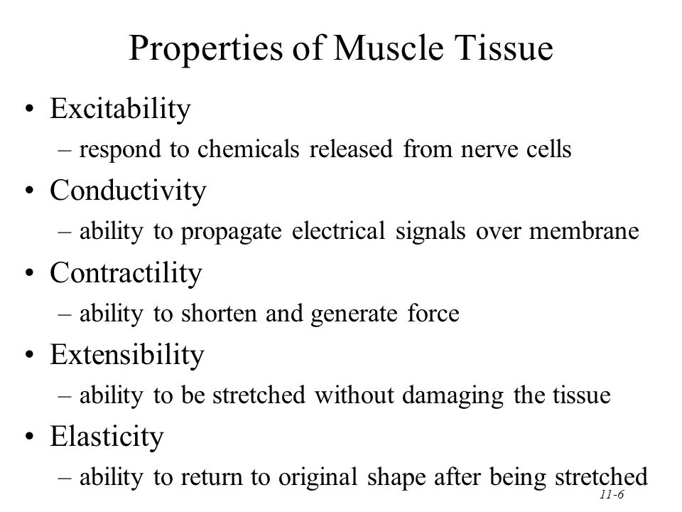 11-6 Properties of Muscle Tissue Excitability –respond to chemicals released from nerve cells Conductivity –ability to propagate electrical signals over membrane Contractility –ability to shorten and generate force Extensibility –ability to be stretched without damaging the tissue Elasticity –ability to return to original shape after being stretched