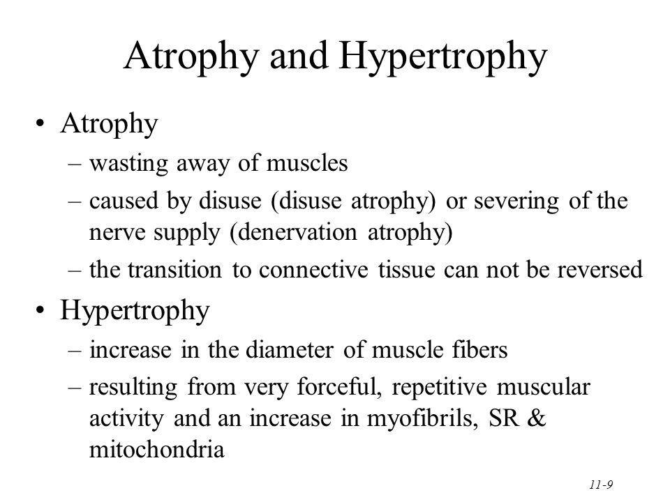 11-9 Atrophy and Hypertrophy Atrophy –wasting away of muscles –caused by disuse (disuse atrophy) or severing of the nerve supply (denervation atrophy) –the transition to connective tissue can not be reversed Hypertrophy –increase in the diameter of muscle fibers –resulting from very forceful, repetitive muscular activity and an increase in myofibrils, SR & mitochondria