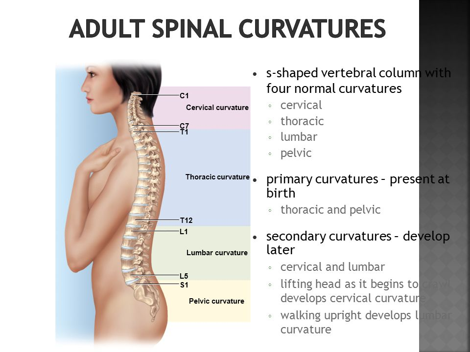 s-shaped vertebral column with four normal curvatures ◦ cervical ◦ thoracic ◦ lumbar ◦ pelvic primary curvatures – present at birth ◦ thoracic and pelvic secondary curvatures – develop later ◦ cervical and lumbar ◦ lifting head as it begins to crawl develops cervical curvature ◦ walking upright develops lumbar curvature Cervical curvature Thoracic curvature Lumbar curvature Pelvic curvature C7 T1 T12 L1 S1 L5 C1