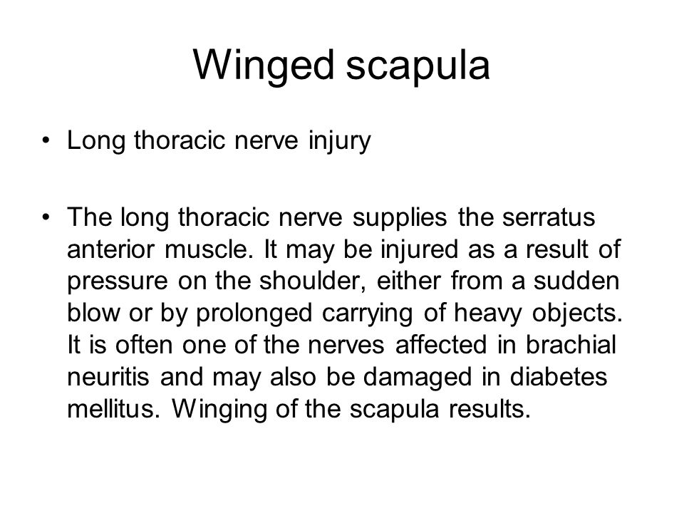 Winged scapula Long thoracic nerve injury The long thoracic nerve supplies the serratus anterior muscle.
