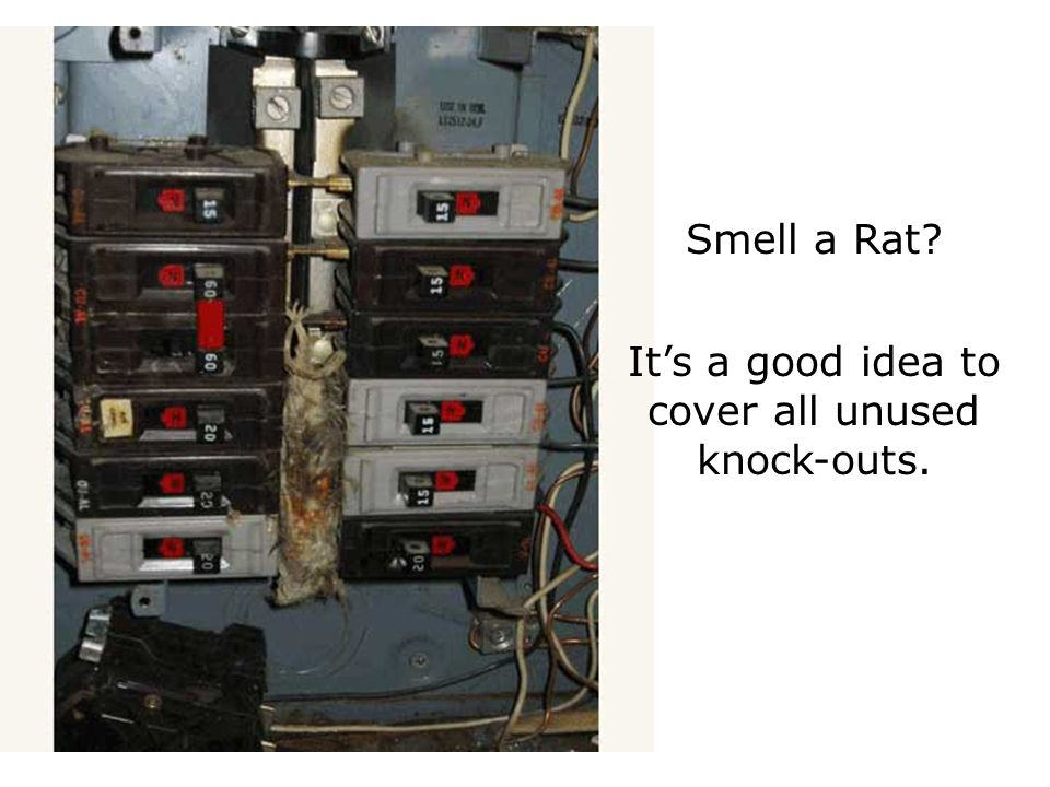 Smell a Rat It's a good idea to cover all unused knock-outs.