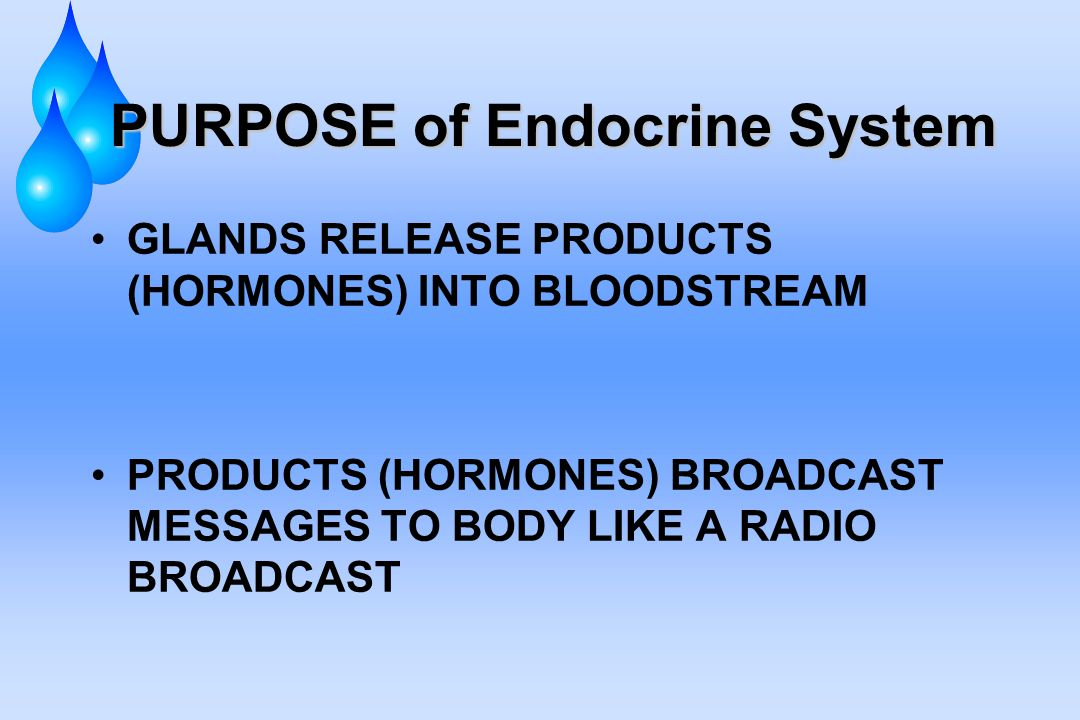 PURPOSE of Endocrine System GLANDS RELEASE PRODUCTS (HORMONES) INTO BLOODSTREAM PRODUCTS (HORMONES) BROADCAST MESSAGES TO BODY LIKE A RADIO BROADCAST