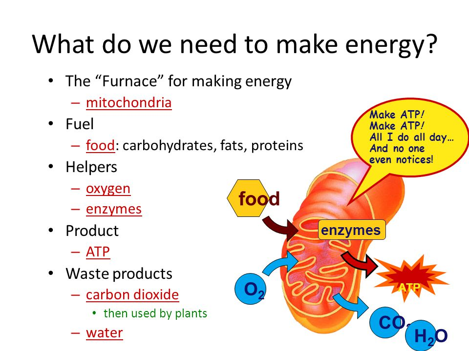 Harvesting energy stored in food Cellular respiration – breaking down food to produce ATP in mitochondria using oxygen – aerobic respiration – usually digesting glucose but could be other sugars, fats, or proteins C 6 H 12 O 6 6O 2 ATP6CO 2 6H 2 O  + ++ glucose + oxygen  energy + carbon + water dioxide O2O2 food ATP