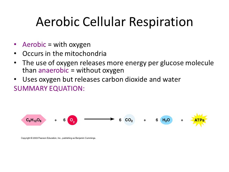 make energy A Body's Energy Budget eat food synthesis (building) energy needed even at rest activity temperature control { growth reproduction repair