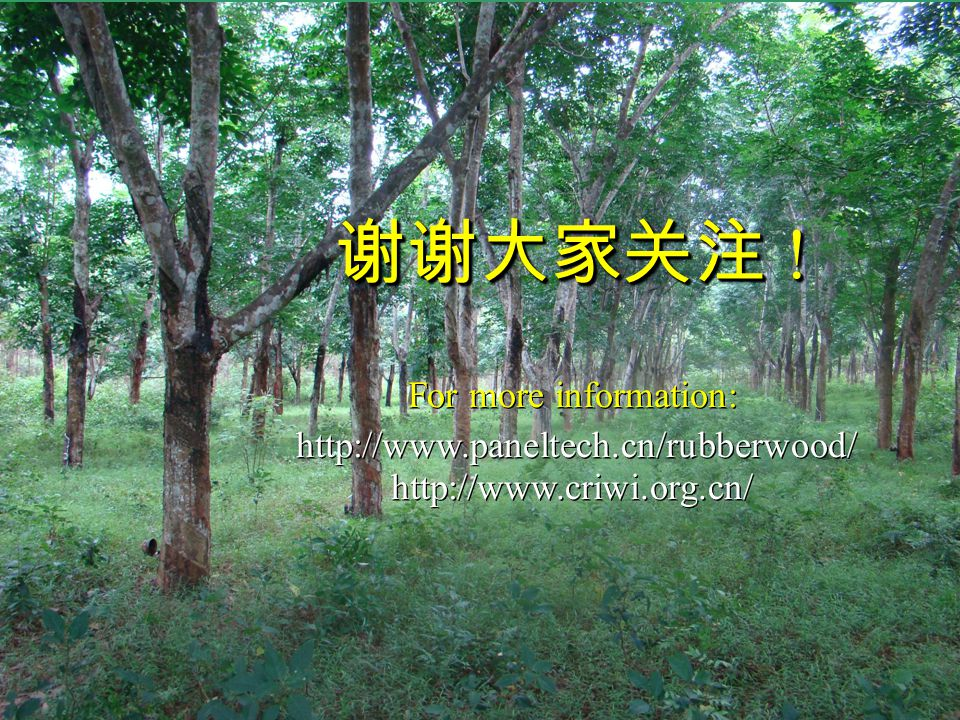 RESEARCH INSTITUTE OF WOOD INDUSTRY (CRIWI) CHINESE ACADEMY OF FORESTRY (CAF) 谢谢大家关注 ! For more information: http://www.paneltech.cn/rubberwood/ http: