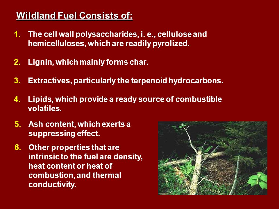 Wildland Fuel Consists of: 1.The cell wall polysaccharides, i.