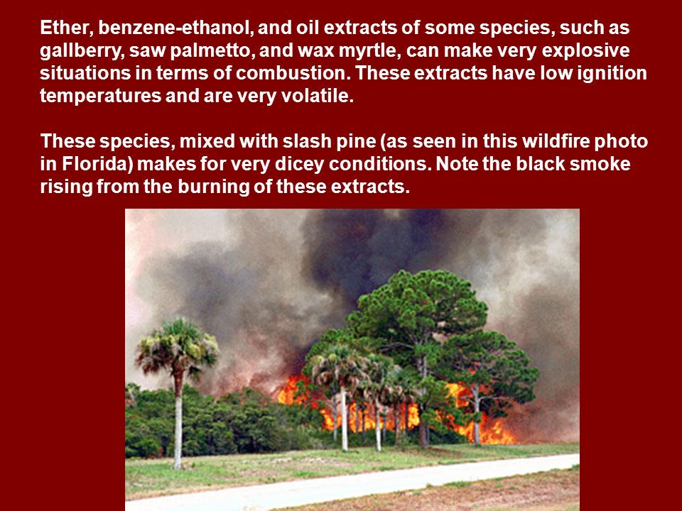 Ether, benzene-ethanol, and oil extracts of some species, such as gallberry, saw palmetto, and wax myrtle, can make very explosive situations in terms of combustion.
