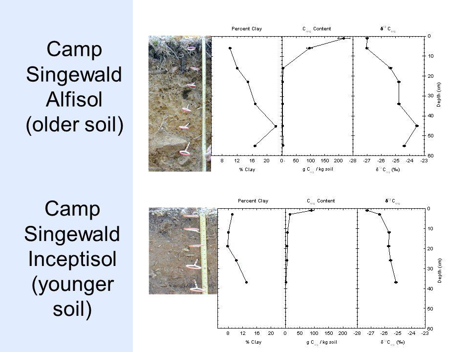 Camp Singewald Alfisol (older soil) Camp Singewald Inceptisol (younger soil)