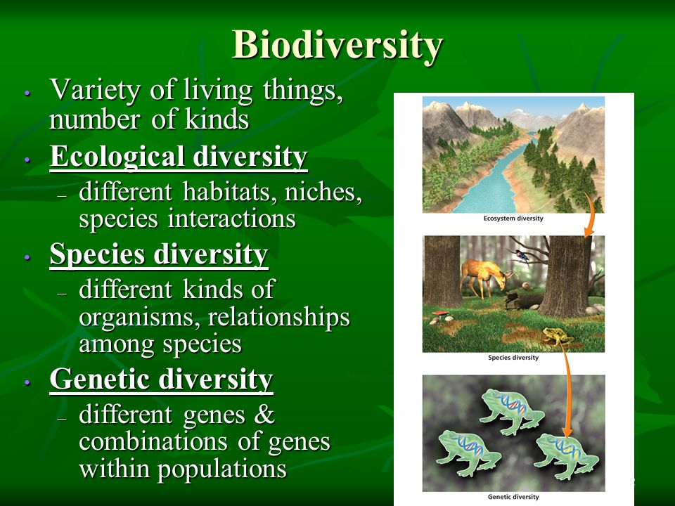 Biodiversity 12 Variety of living things, number of kinds Variety of living things, number of kinds Ecological diversity Ecological diversity – differ