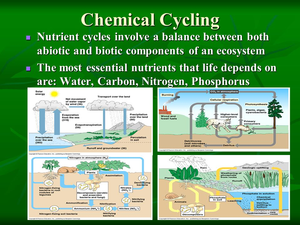 Chemical Cycling Nutrient cycles involve a balance between both abiotic and biotic components of an ecosystem Nutrient cycles involve a balance between both abiotic and biotic components of an ecosystem The most essential nutrients that life depends on are: Water, Carbon, Nitrogen, Phosphorus The most essential nutrients that life depends on are: Water, Carbon, Nitrogen, Phosphorus