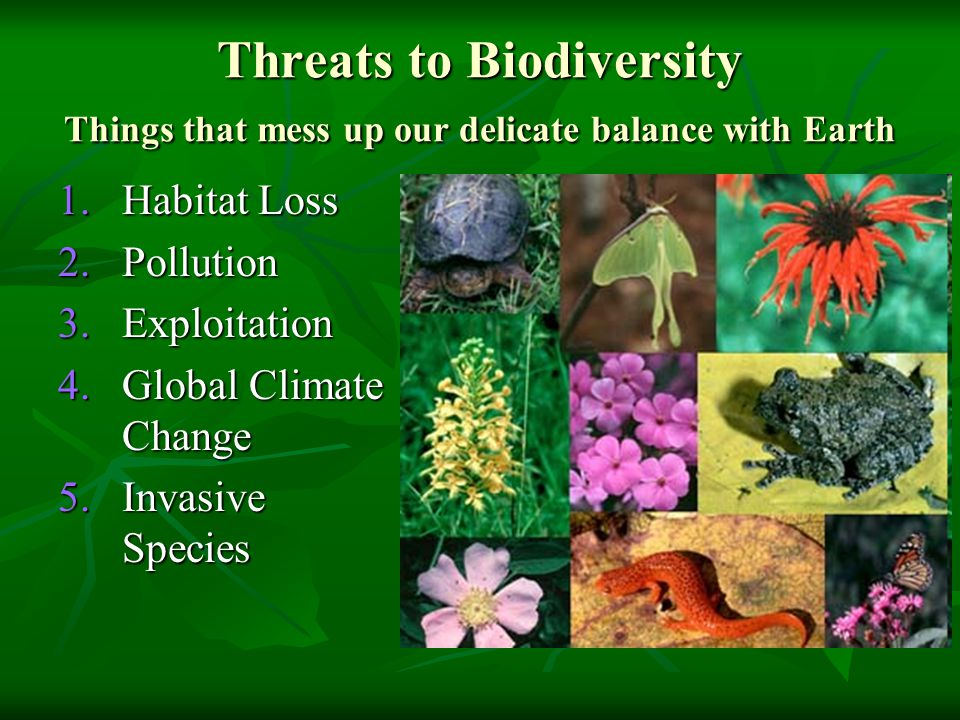 Threats to Biodiversity Things that mess up our delicate balance with Earth 1.Habitat Loss 2.Pollution 3.Exploitation 4.Global Climate Change 5.Invasive Species
