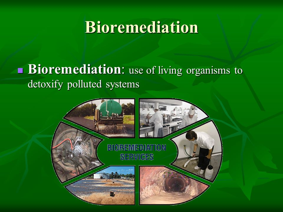 Bioremediation Bioremediation: use of living organisms to detoxify polluted systems Bioremediation: use of living organisms to detoxify polluted syste