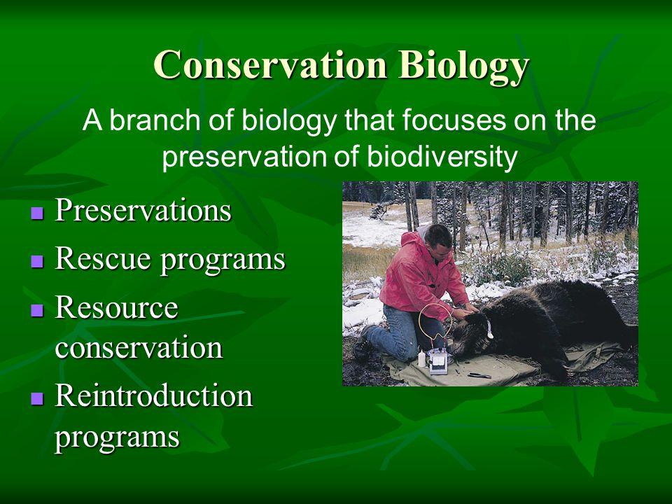 Conservation Biology Conservation Biology Preservations Preservations Rescue programs Rescue programs Resource conservation Resource conservation Reintroduction programs Reintroduction programs A branch of biology that focuses on the preservation of biodiversity