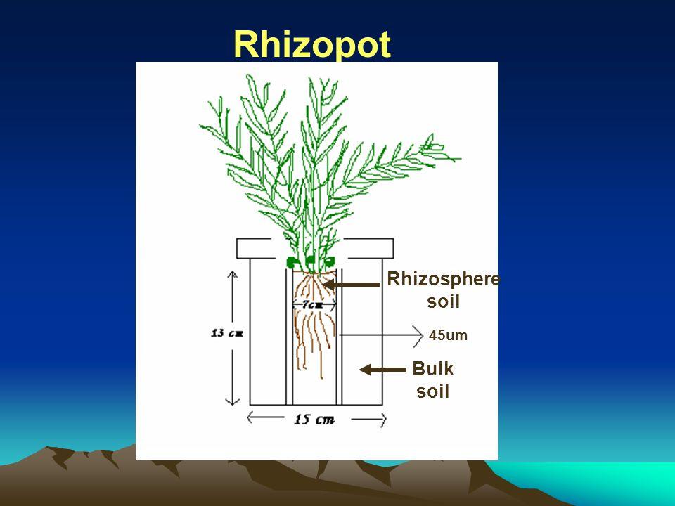 Rhizopot Rhizosphere soil Bulk soil 45um
