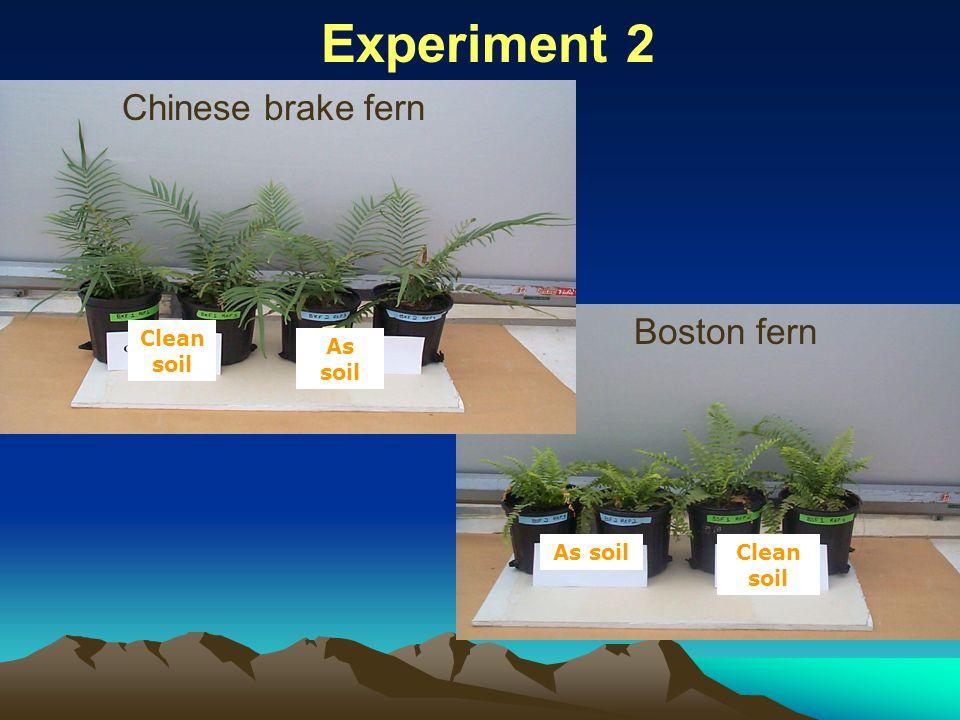 Clean soil As soil Experiment 2 Clean soil As soil Chinese brake fern Boston fern