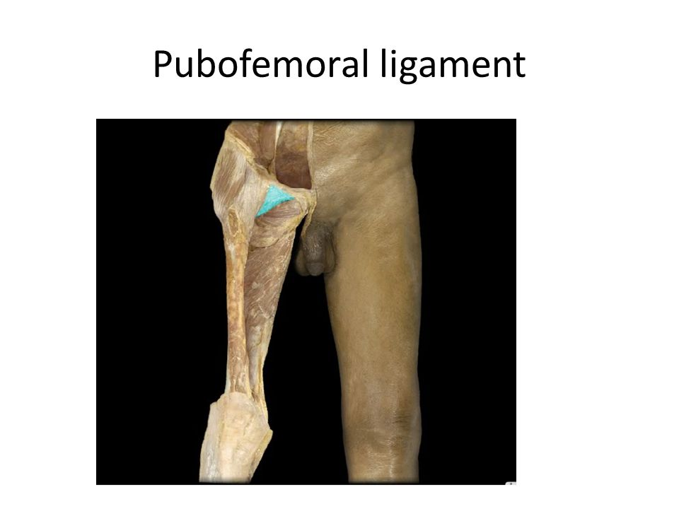 Pubofemoral ligament