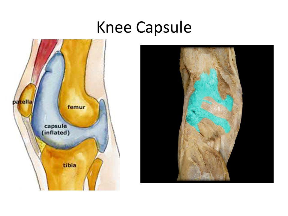 Knee Capsule