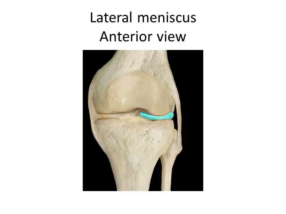 Lateral meniscus Anterior view