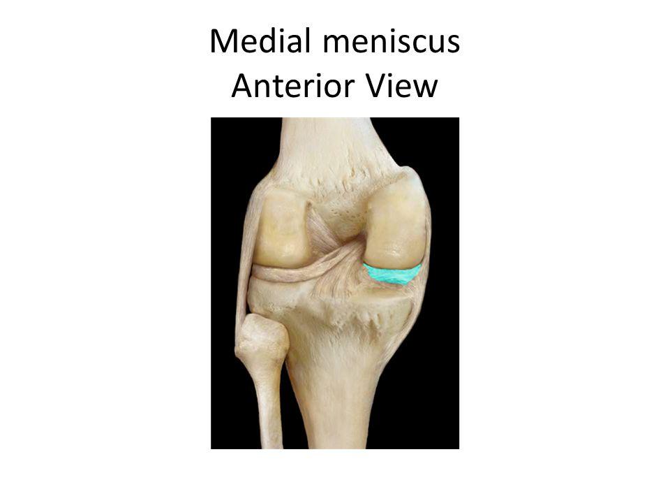 Medial meniscus Anterior View