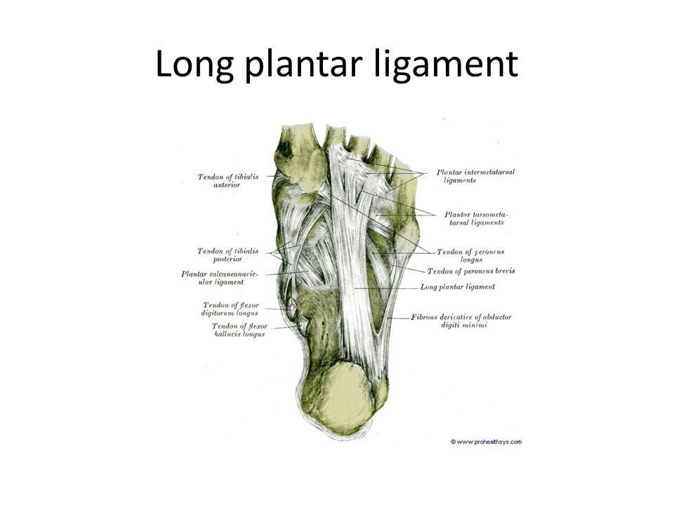 Long plantar ligament