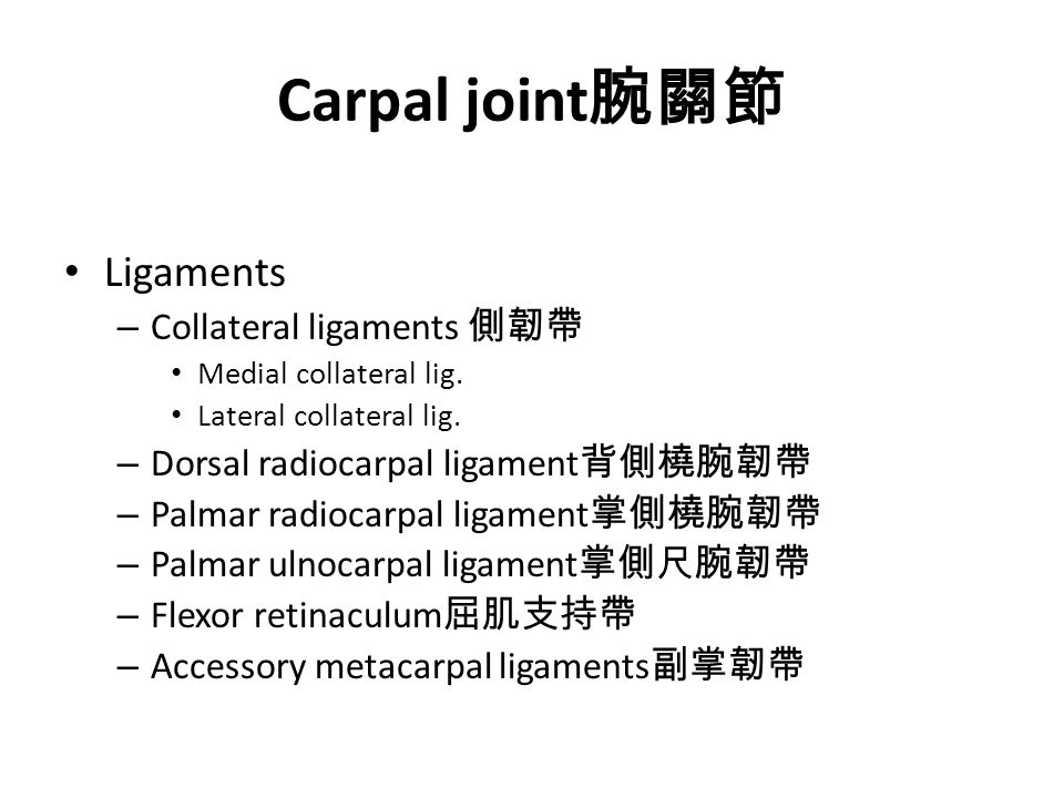 Carpal joint 腕關節 Ligaments – Collateral ligaments 側韌帶 Medial collateral lig.