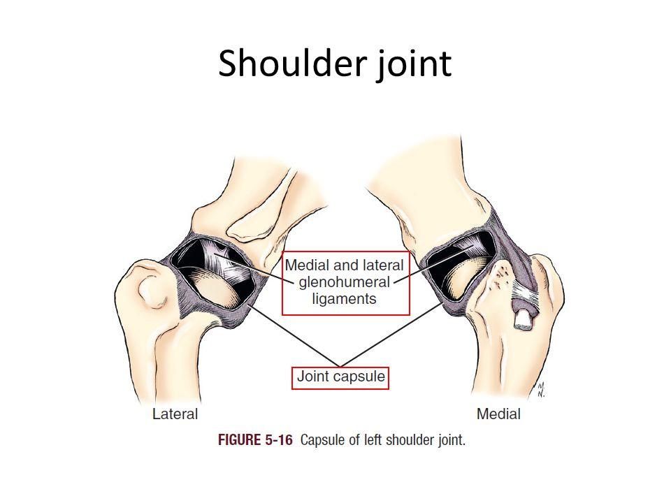 Joints of carpal region Carpal joint 腕關節 Antebrachiocarpal joint 前臂腕關節 Distal radioulnar joint Radiocarpal joint Ulnocarpal joint Intercarpal joints 腕骨間關節 Carpometacarpal joint 腕掌間關節