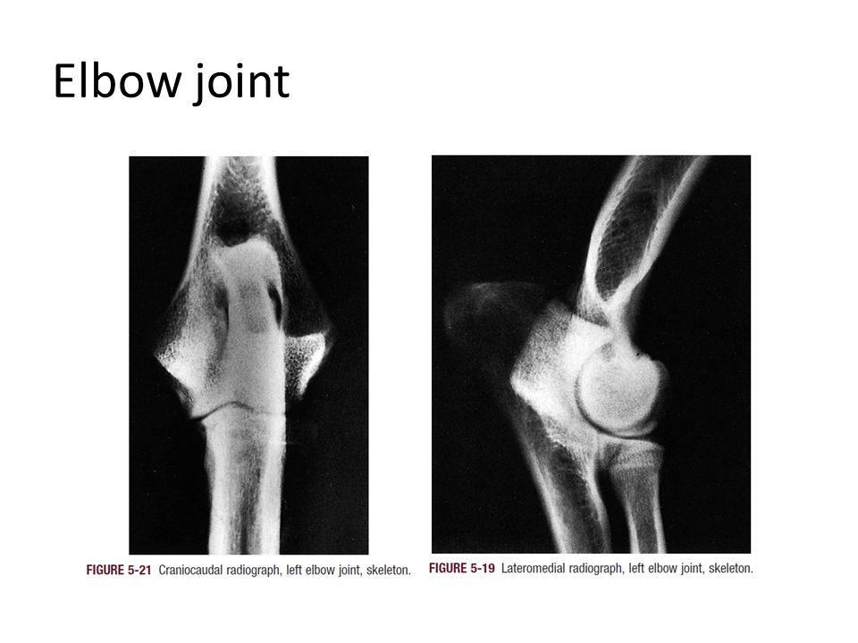 Dorsal surface of Carpal joint Intercarpal lig.