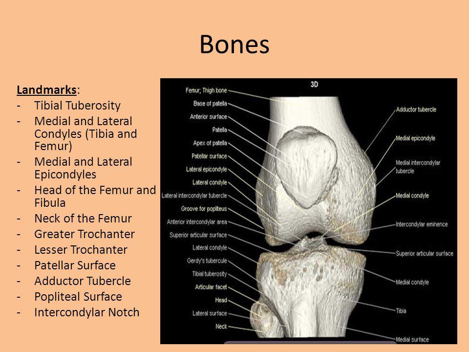 Pes Anserine Pes Anserine: -A term for a boney landmark located on the tibia.
