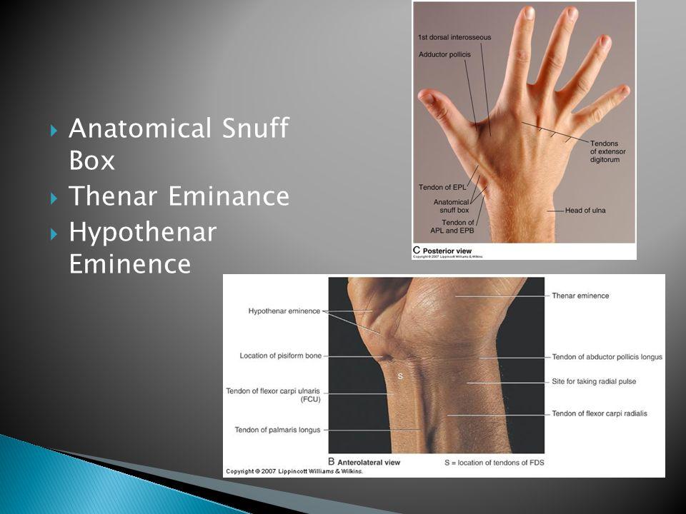  Anatomical Snuff Box  Thenar Eminance  Hypothenar Eminence