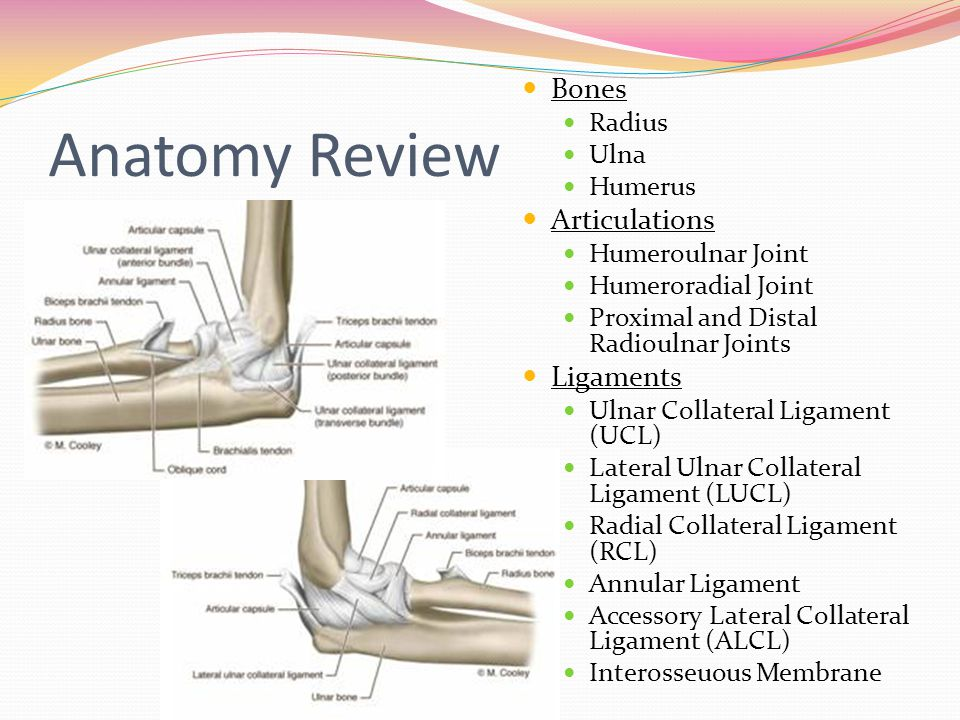 Anatomy Review Bones Radius Ulna Humerus Articulations Humeroulnar Joint Humeroradial Joint Proximal and Distal Radioulnar Joints Ligaments Ulnar Coll