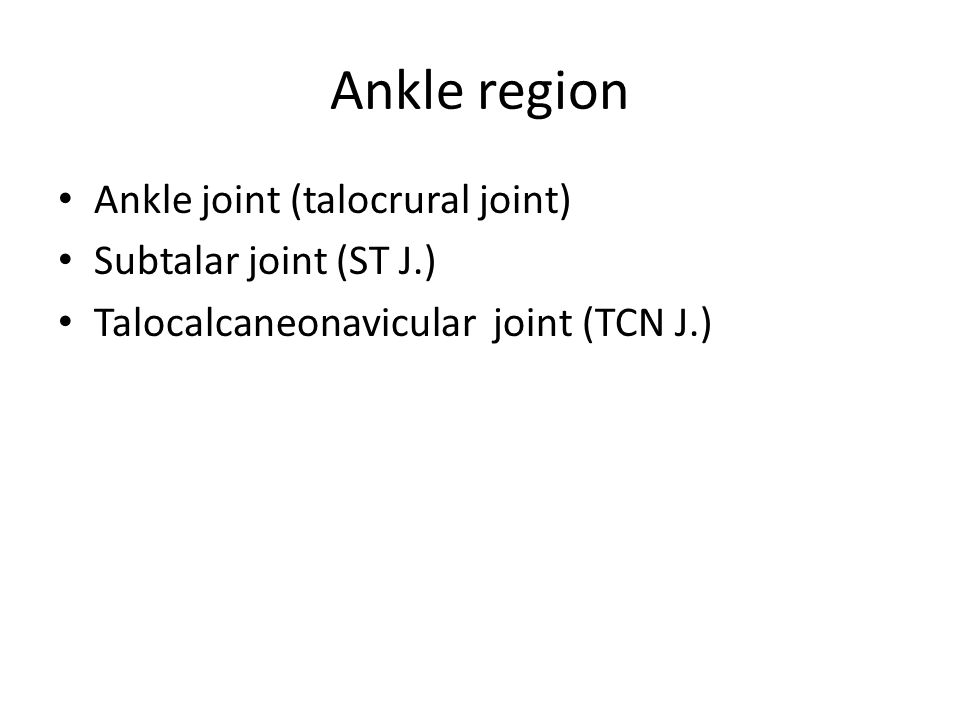 Ankle region Ankle joint (talocrural joint) Subtalar joint (ST J.) Talocalcaneonavicular joint (TCN J.)