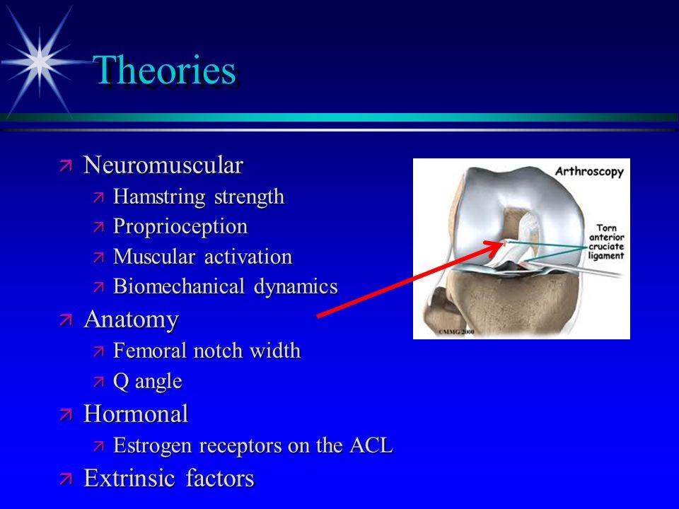 Theories ä Neuromuscular ä Hamstring strength ä Proprioception ä Muscular activation ä Biomechanical dynamics ä Anatomy ä Femoral notch width ä Q angl