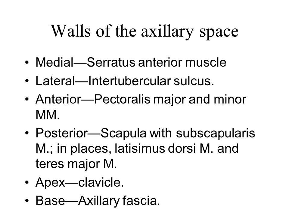 Medial—Serratus anterior muscle Lateral—Intertubercular sulcus. Anterior—Pectoralis major and minor MM. Posterior—Scapula with subscapularis M.; in pl