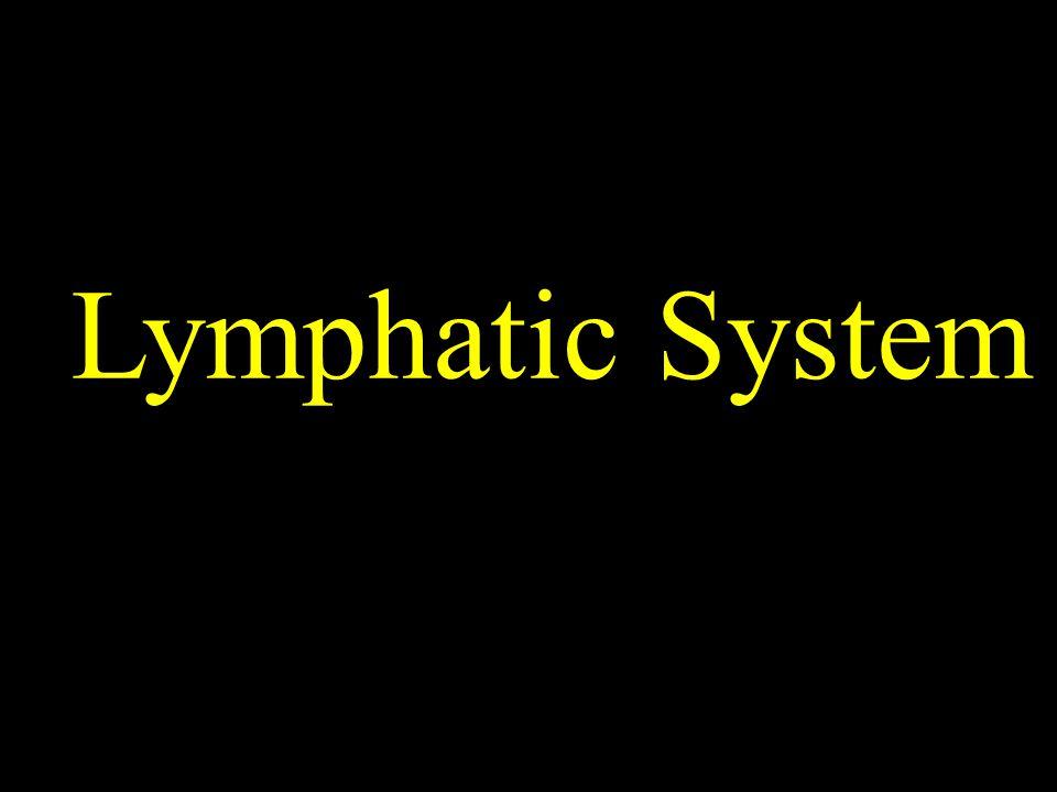 Lymphatic System