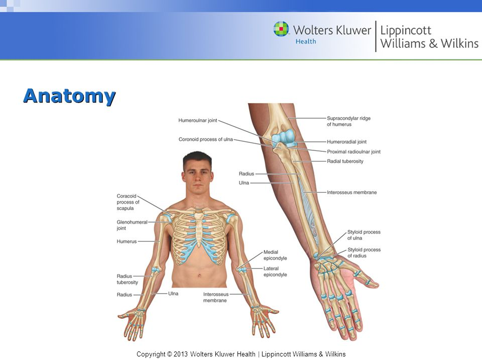 Copyright © 2013 Wolters Kluwer Health | Lippincott Williams & Wilkins Anatomy