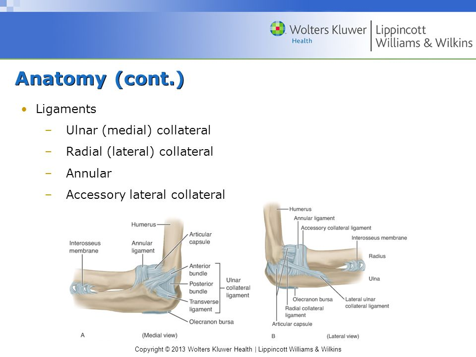 Copyright © 2013 Wolters Kluwer Health | Lippincott Williams & Wilkins Anatomy (cont.) Ligaments –Ulnar (medial) collateral –Radial (lateral) collateral –Annular –Accessory lateral collateral