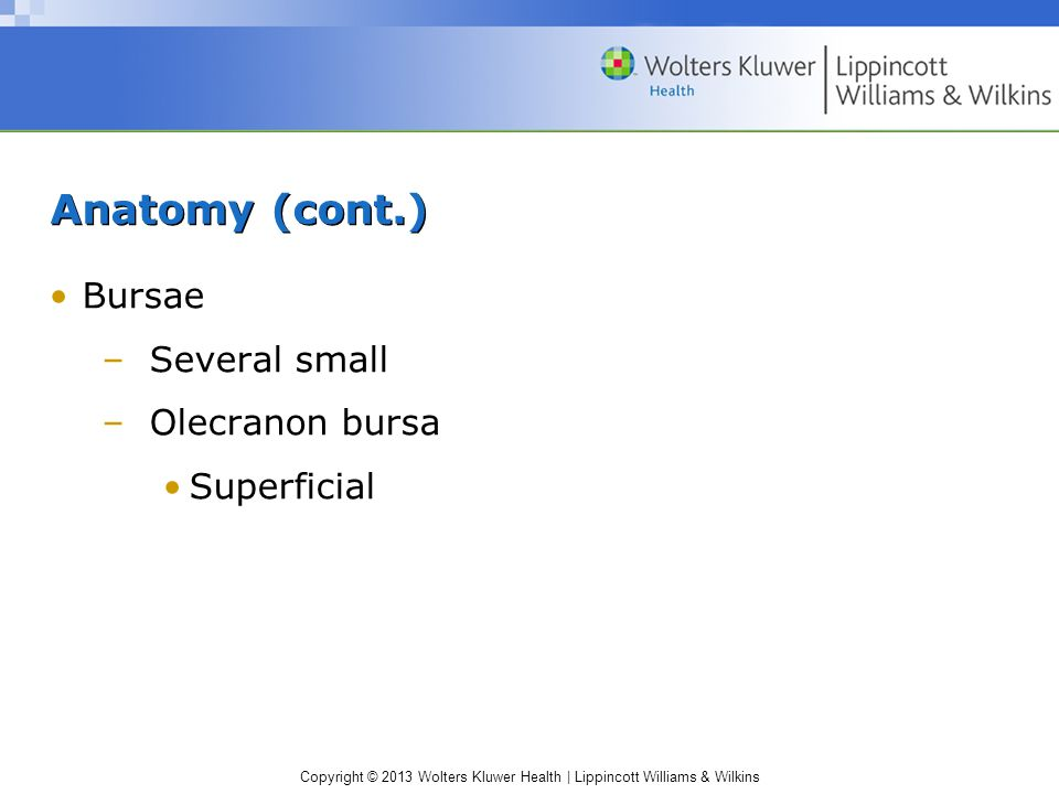 Copyright © 2013 Wolters Kluwer Health | Lippincott Williams & Wilkins Anatomy (cont.) Bursae –Several small –Olecranon bursa Superficial
