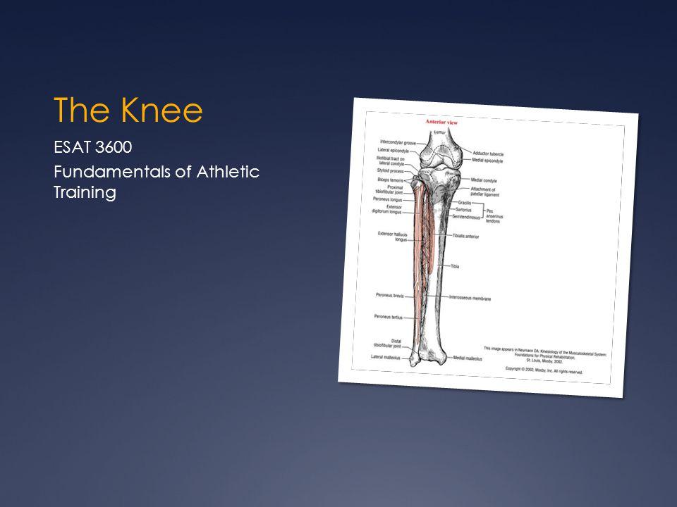 The Knee ESAT 3600 Fundamentals of Athletic Training