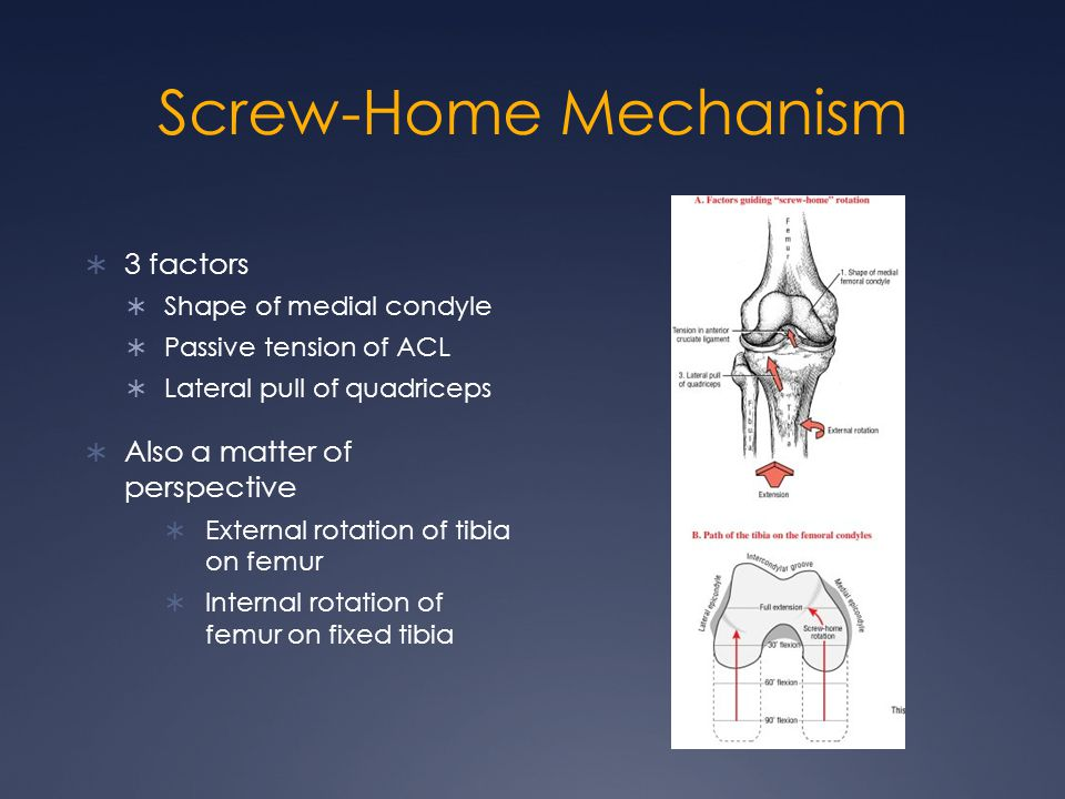 Screw-Home Mechanism  3 factors  Shape of medial condyle  Passive tension of ACL  Lateral pull of quadriceps  Also a matter of perspective  Exte