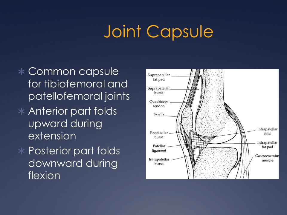 Joint Capsule  Common capsule for tibiofemoral and patellofemoral joints  Anterior part folds upward during extension  Posterior part folds downwar