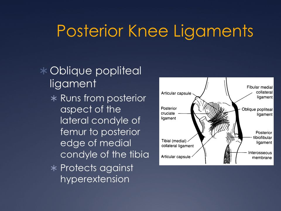 Posterior Knee Ligaments  Oblique popliteal ligament  Runs from posterior aspect of the lateral condyle of femur to posterior edge of medial condyle