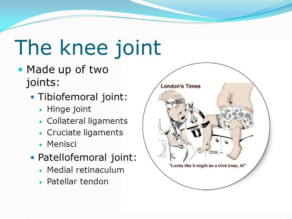 The knee joint Made up of two joints: Tibiofemoral joint: Hinge joint Collateral ligaments Cruciate ligaments Menisci Patellofemoral joint: Medial ret