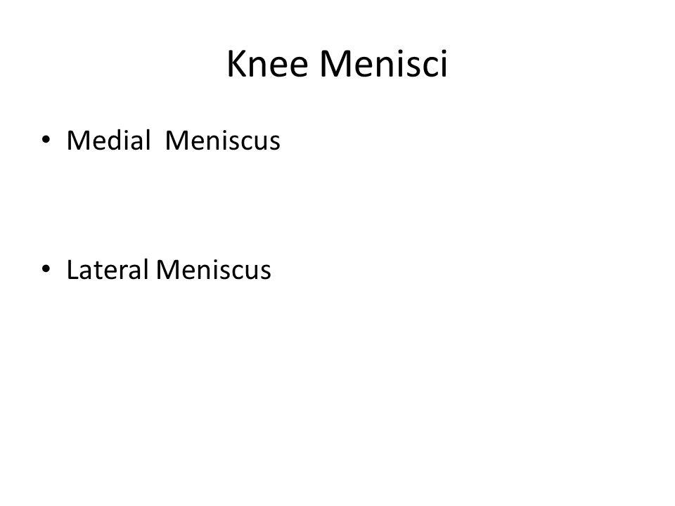 Knee Menisci Medial Meniscus Lateral Meniscus