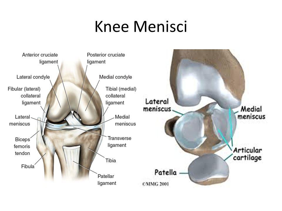 Knee Menisci