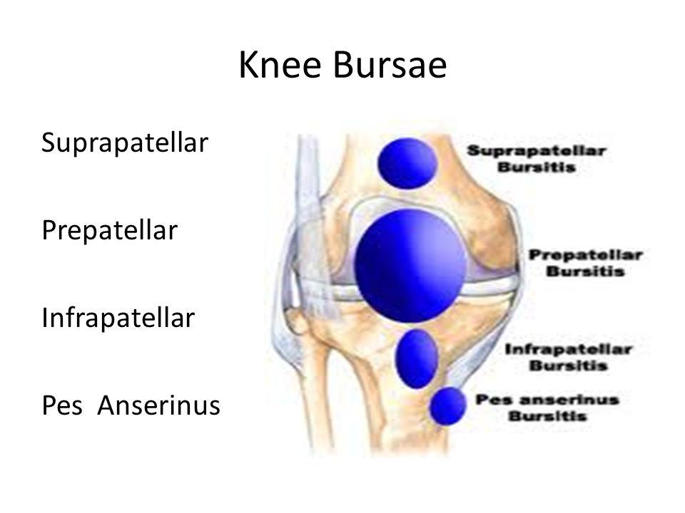 Knee Bursae Suprapatellar Prepatellar Infrapatellar Pes Anserinus