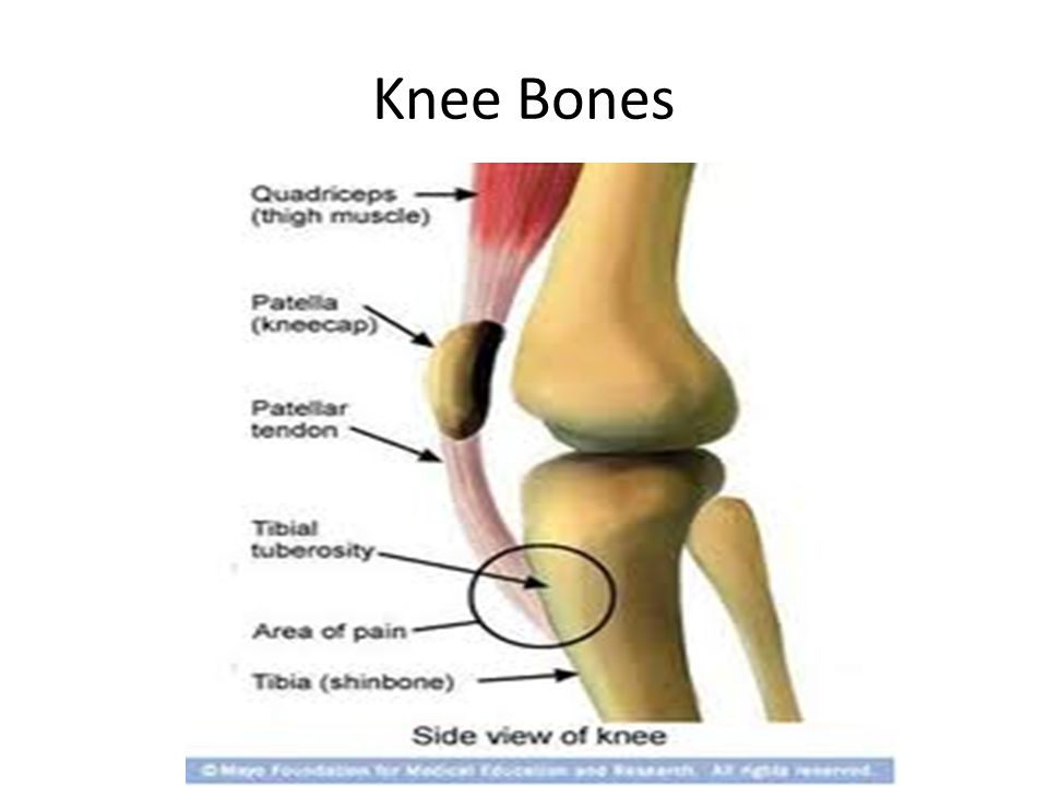 Knee US( Lateral)