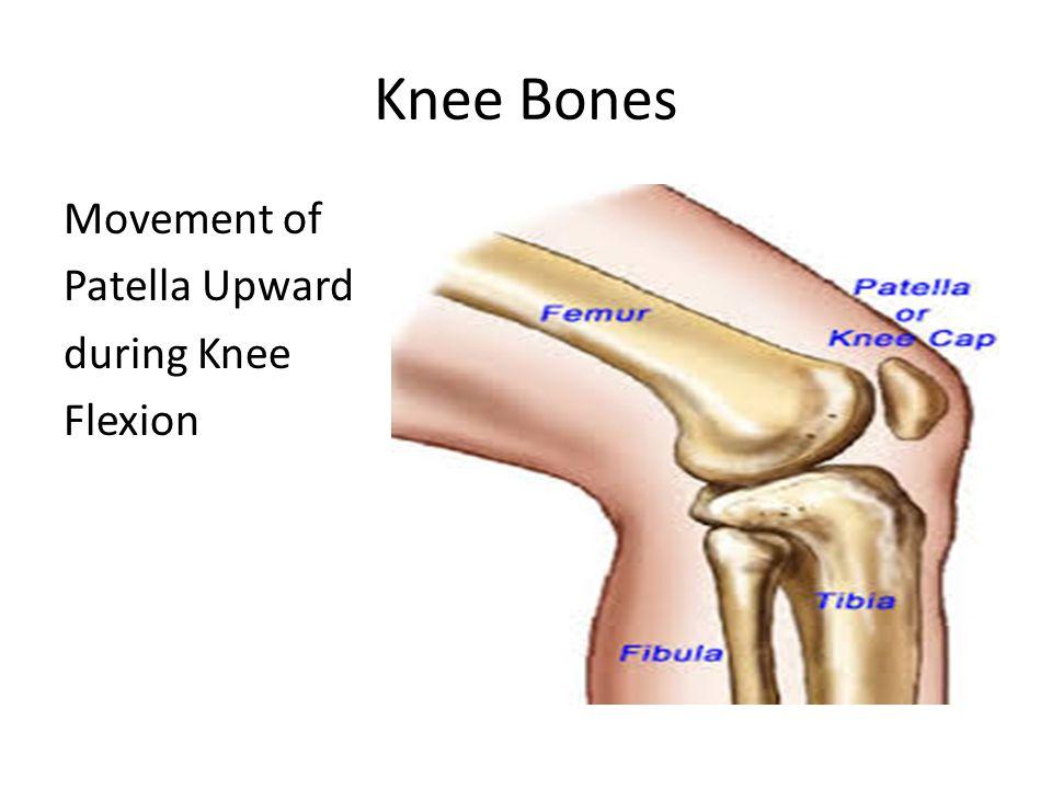 Movement of Patella Upward during Knee Flexion