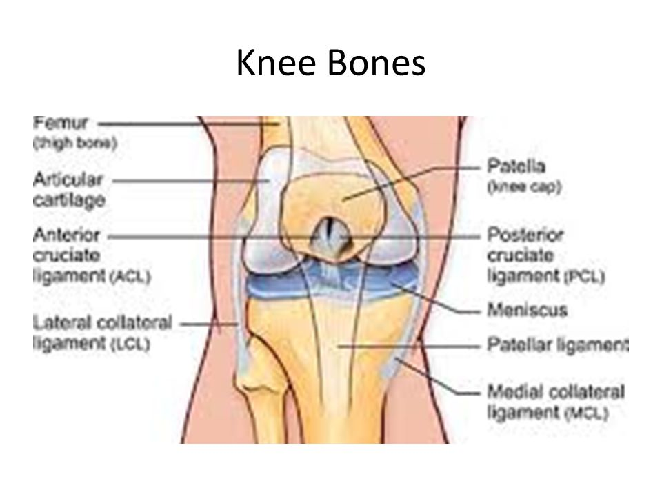 Common Knee Ligaments Ant Cruciate Ligament Post Cruciate Ligament Medial Collateral Ligament Lateral Collateral Ligament Arcuate Ligament Coronary Ligament